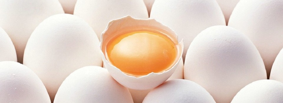photography_egg--01_15-1920x1440